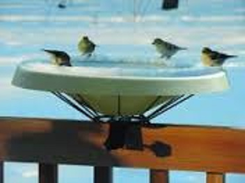 Heated Bird Baths/All Season